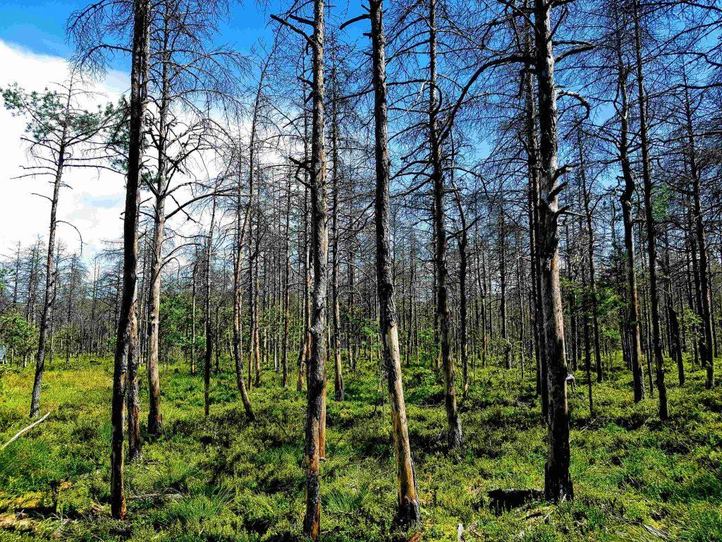 Vegetation in the peat bog