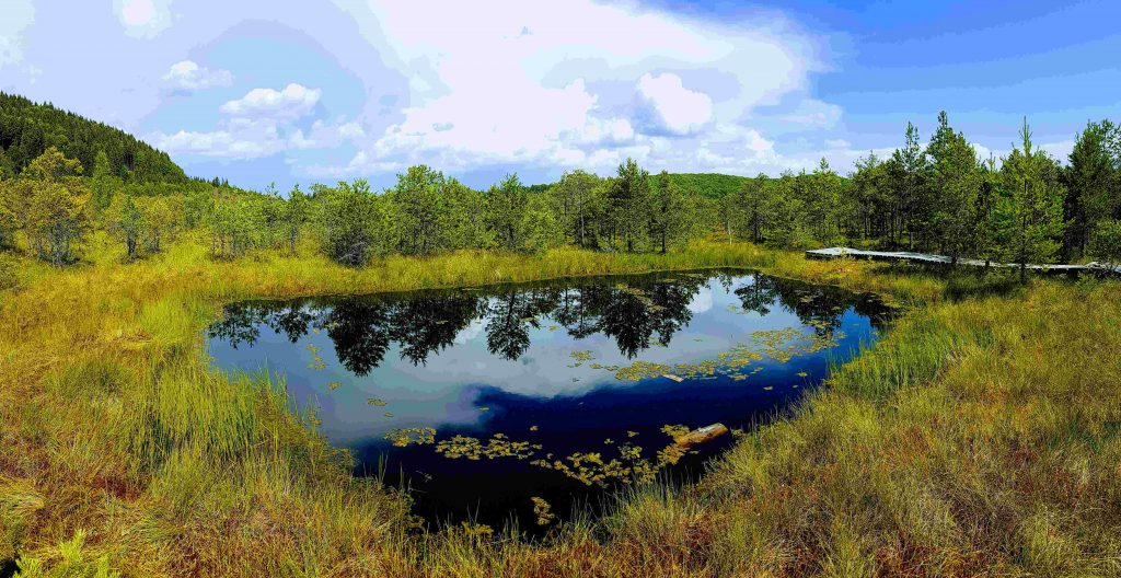 Lake at Mohos Peat Bog