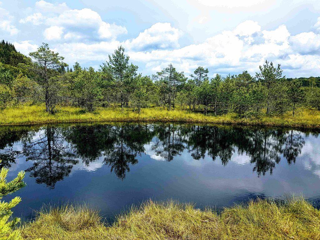 Tar-like lake at Mohos Peat Bog