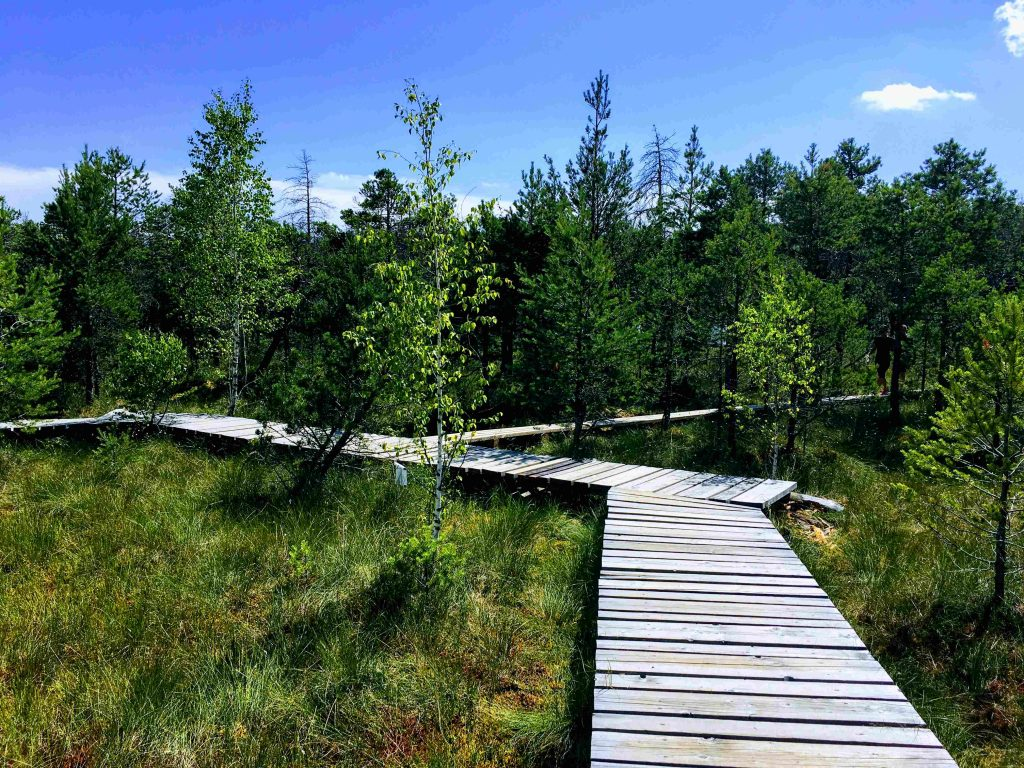 Wood path at Mohos Peat Bog