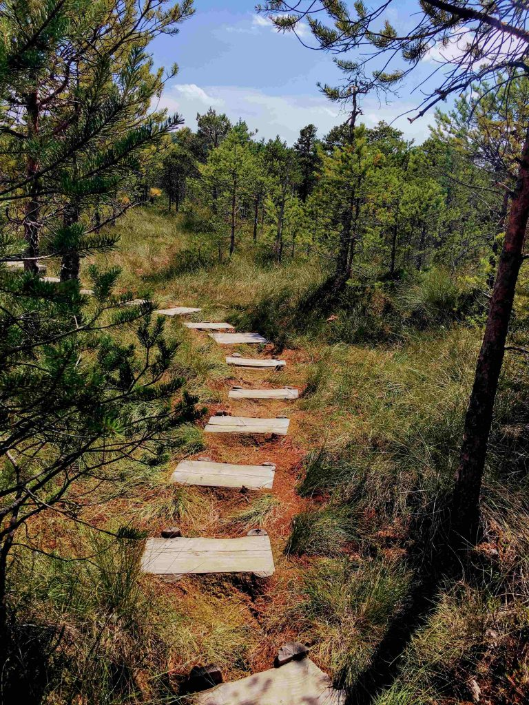 Steps at Mohos Peat Bog