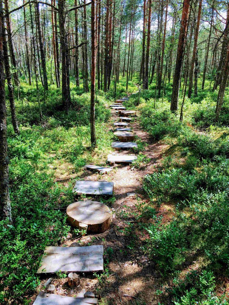 Steps at Mohos Peat Bog