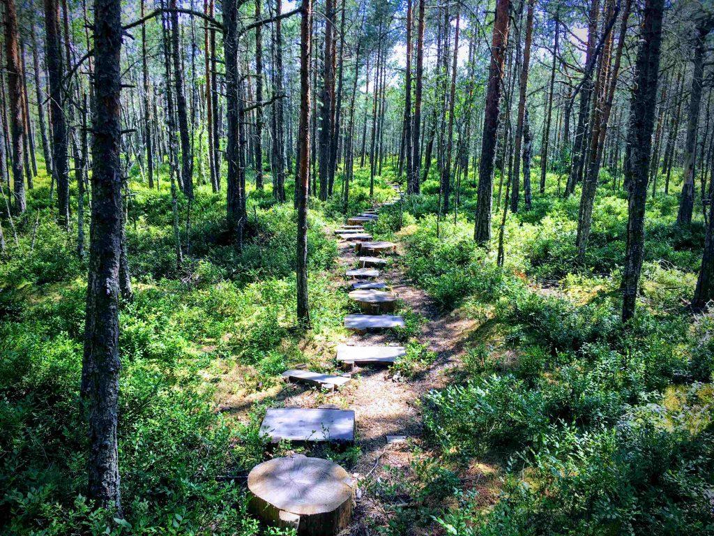 Wood path at Mohos Peat Bog