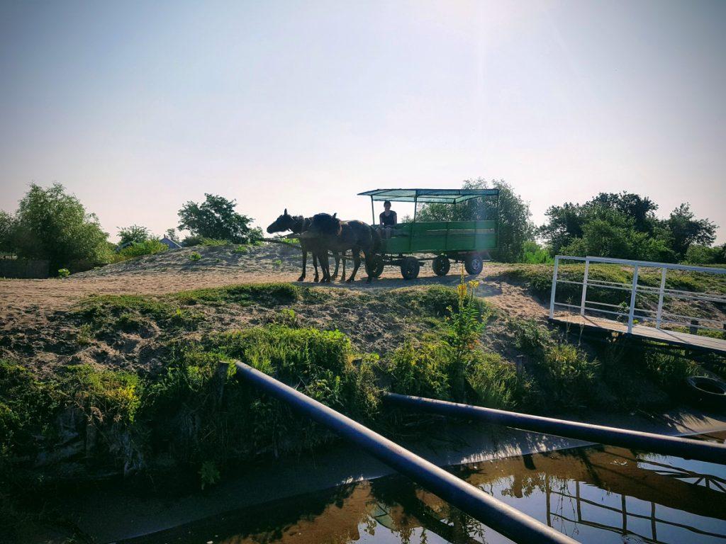 Horse drawn carriage, Letea, Danube Delta