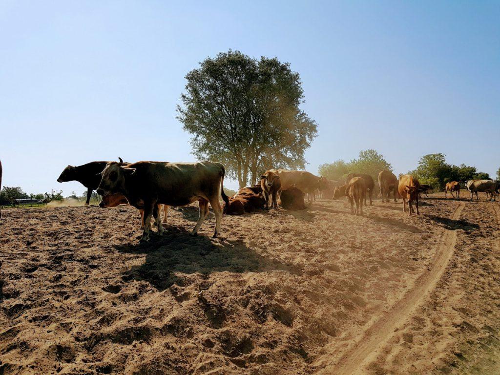 Animals in the sands of Letea