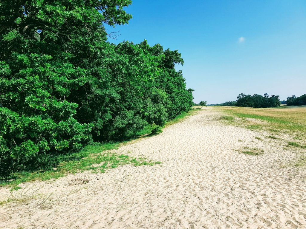 Sand Dunes in Letea