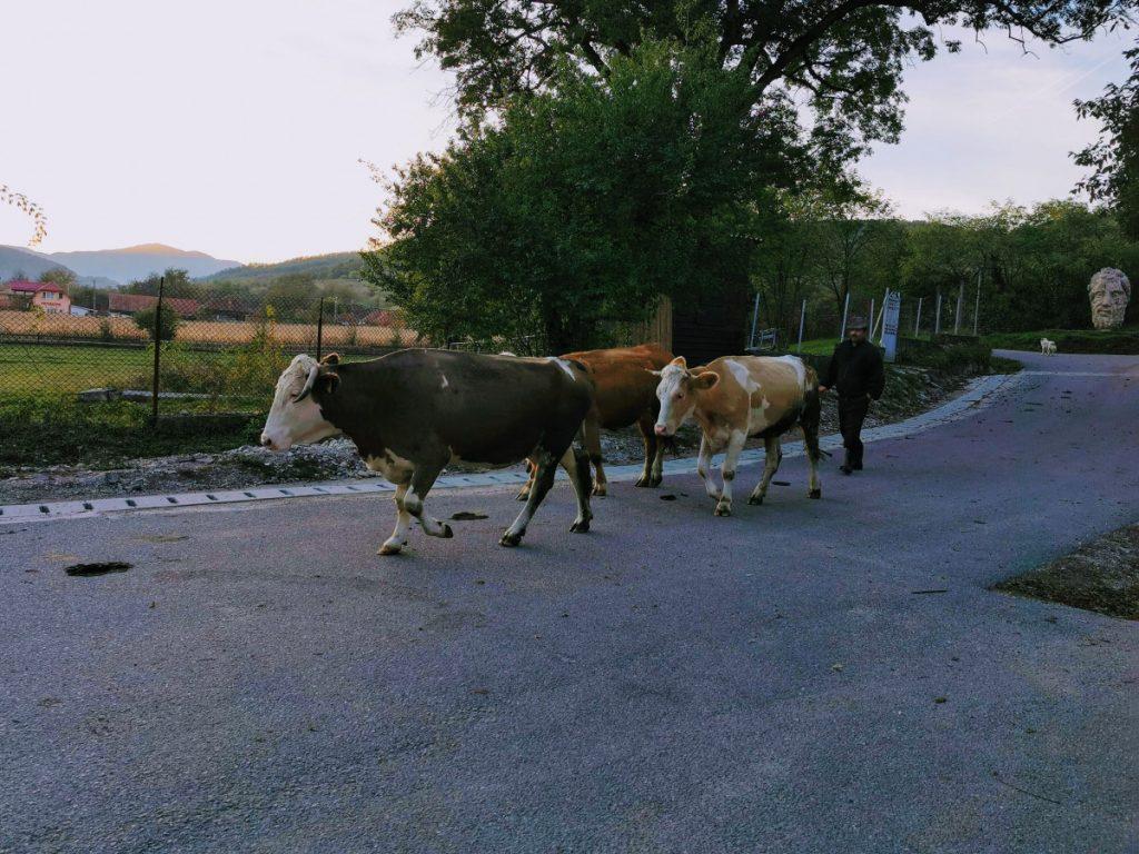Village life in Densuş Village