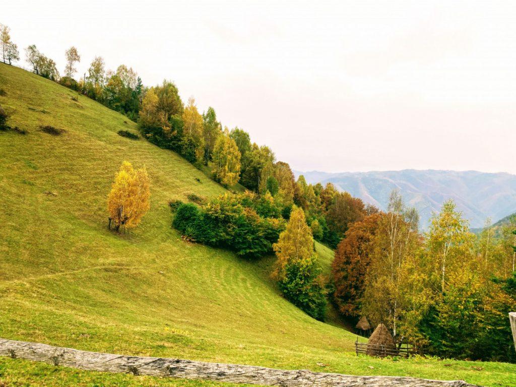 Autumn perspective in Târsa Village