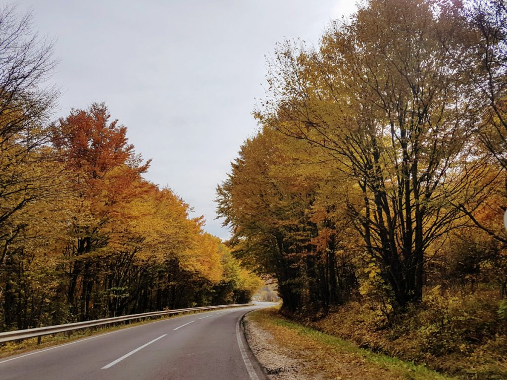 Road DN 10 in autumn