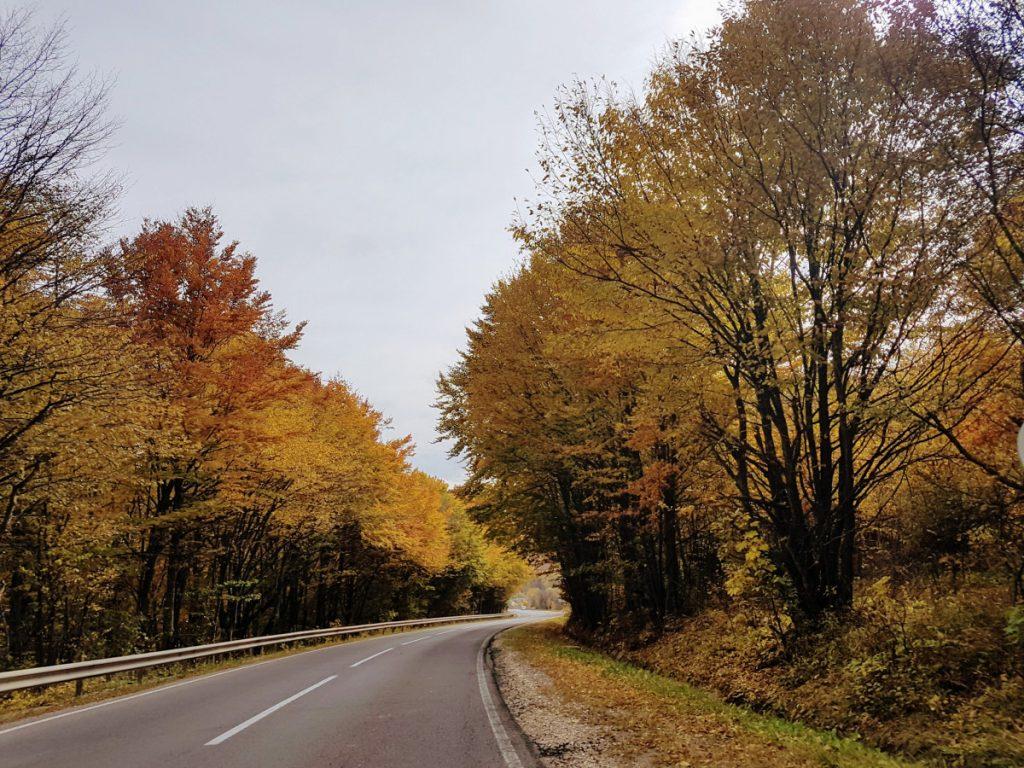 Road DN 10 in autumn