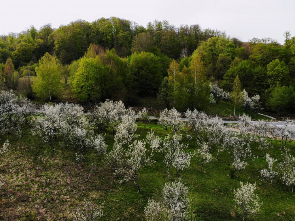 Spring in Buzau Pass