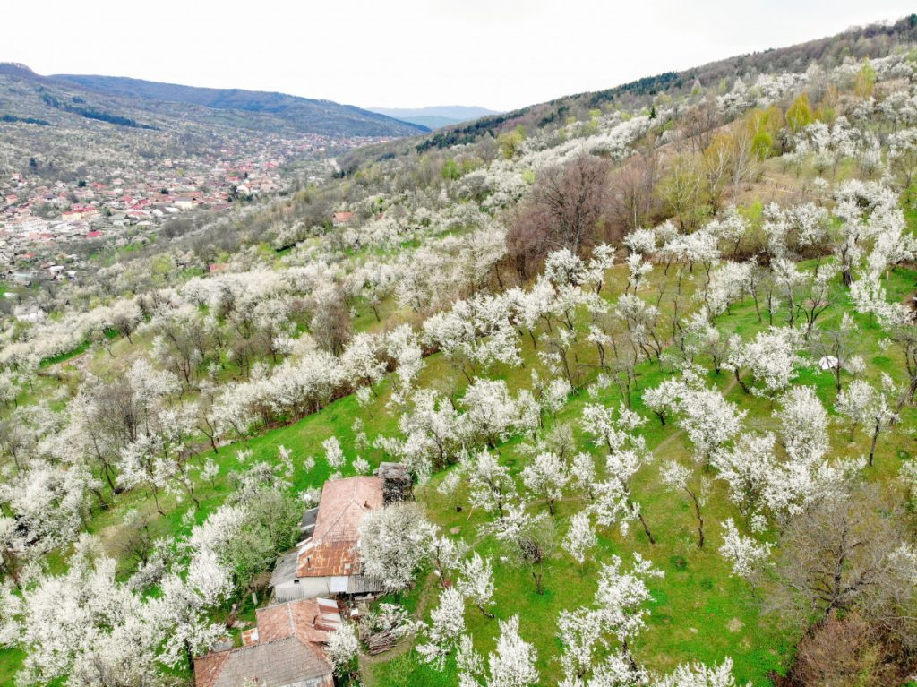 Spring near Moroeni