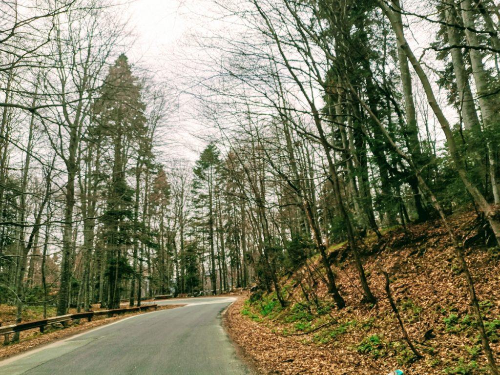 Road to Cota 1400 Sinaia