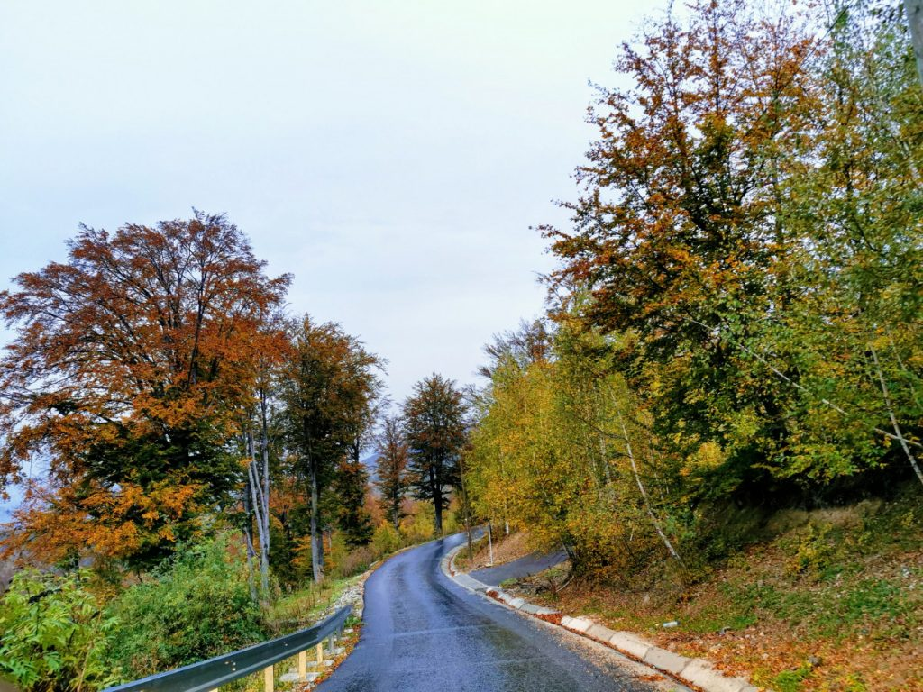 Road to Târsa Village