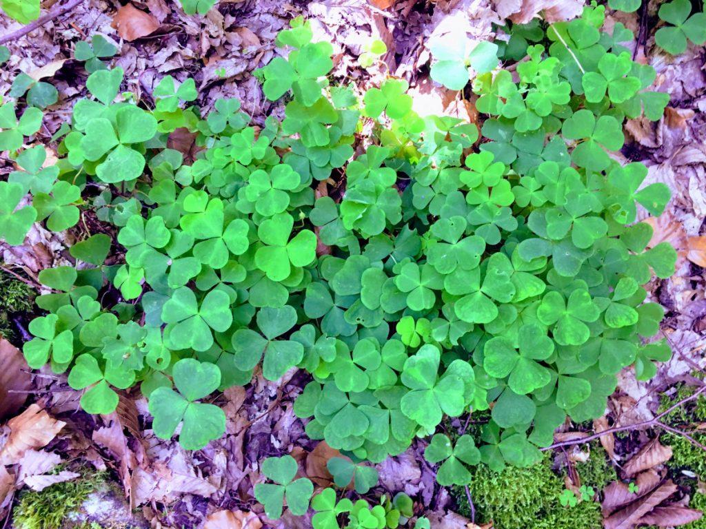 Amazing greens in Apuseni